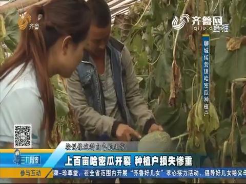 聊城:上百亩哈密瓜开裂 种植户损失惨重