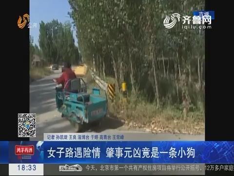 淄博:女子路遇险情 肇事元凶竟是一条小狗