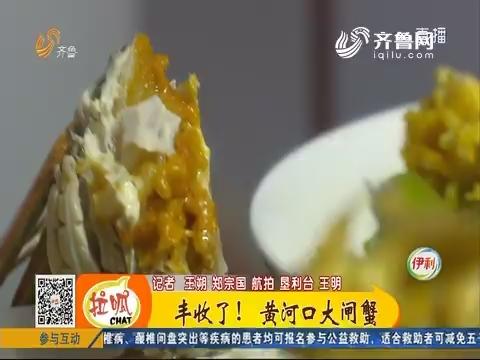 【我要当村姑】东营:丰收了!黄河口大闸蟹