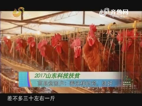 20171004《农科直播间》:2017山东科技扶贫 莒县贫困户——养这样的鸡,挺好