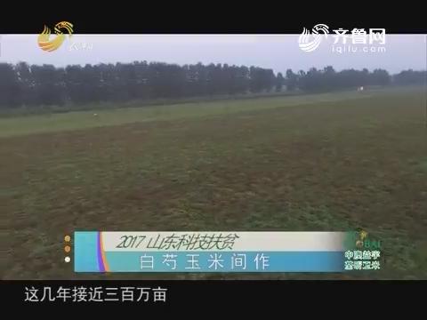 20171005《农科直播间》:2017山东科技扶贫 白芍玉米间作