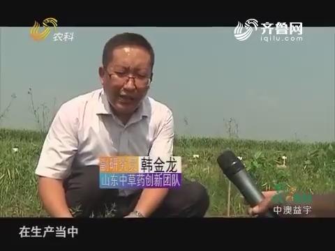 20171006《农科直播间》:2017山东科技扶贫 徐长卿:道地药材新魅力