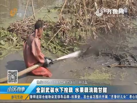 济南:全副武装水下挖藕 水果藕清脆甘甜