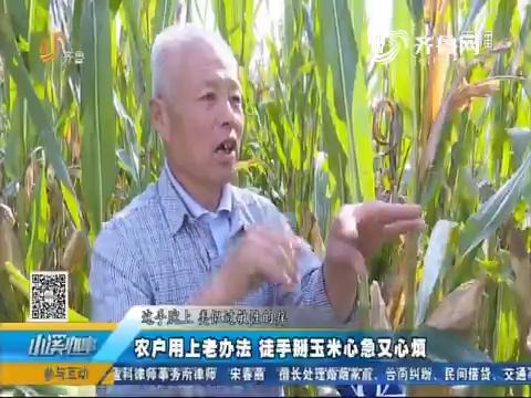 夏津:农户用上老办法 徒手掰玉米心急又心烦