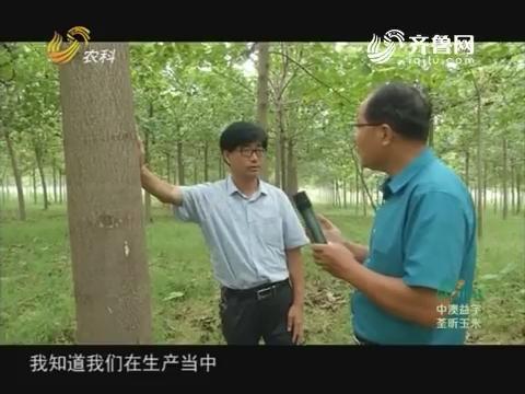 20171007《农科直播间》:2017山东科技扶贫 木材战略:四倍体泡桐应运而生