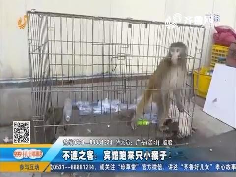 泰安:不速之客 宾馆跑来只小猴子!