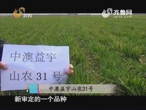20171008《当前农事》:中澳益宇山农31号