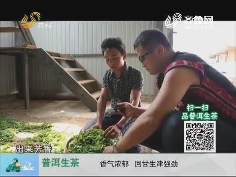 20171008《中国原产递》:普洱生茶