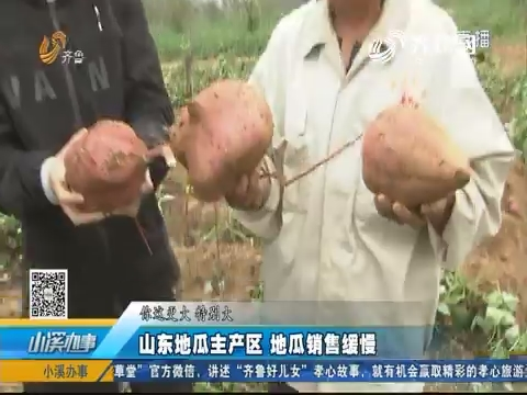 邹城:山东地瓜主产区 地瓜销量缓慢