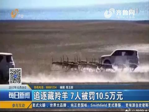 追逐藏羚羊 7人被罚10.5万元