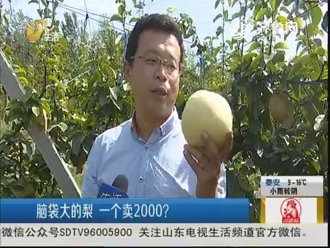 济南:脑袋大的梨 一个卖2000?