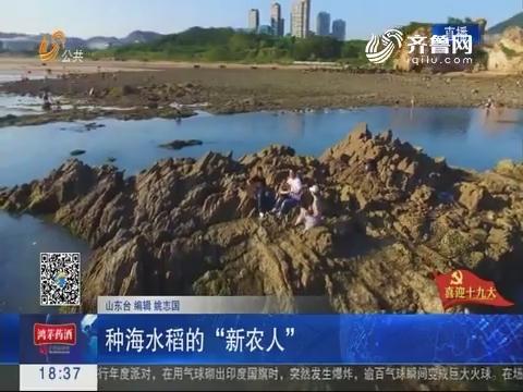 """【喜迎十九大】青岛:种海水稻的""""新农人"""""""