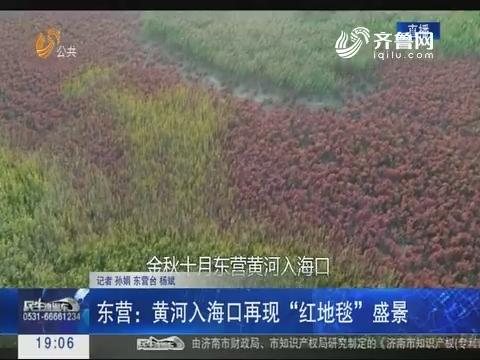"""东营:黄河入海口再现""""红地毯""""盛景"""