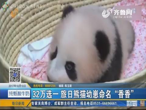 """32万选一 旅日熊猫幼崽命名""""香香"""""""