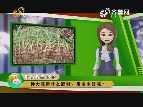 庄稼医院远程会诊:种大蒜用什么肥料?用多少好呢?