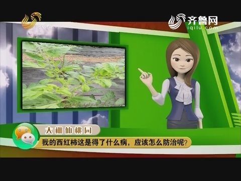 庄稼医院远程会诊:我的西红柿这是得了什么病,应该怎么防治呢?
