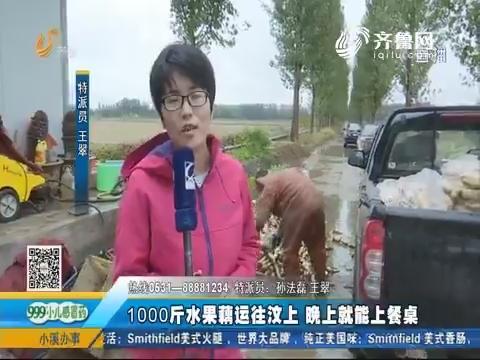 济南:滞销水果藕有销路了 种植户冒雨挖藕