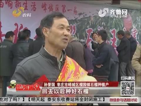 【十九大时光】枣庄:石榴大赛 赛出好日子