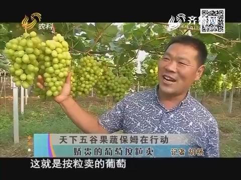 天下五谷果树保姆在行动:娇贵的葡萄按粒卖