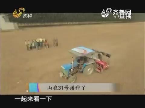 20171012《当前农事》:山农31号播种了