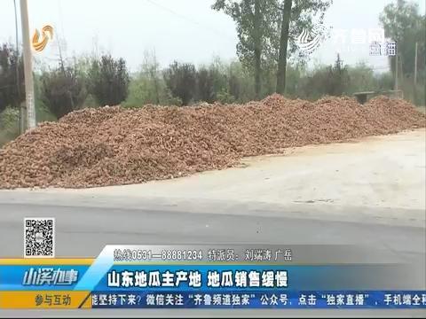 邹城:山东地瓜主产地 地瓜销售缓慢