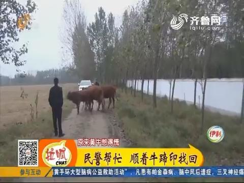 菏泽:惊慌!四头黄牛不见了