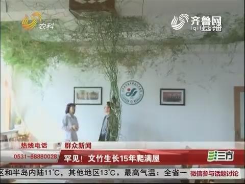 【群众新闻】平度:罕见!文竹生长15年爬满屋