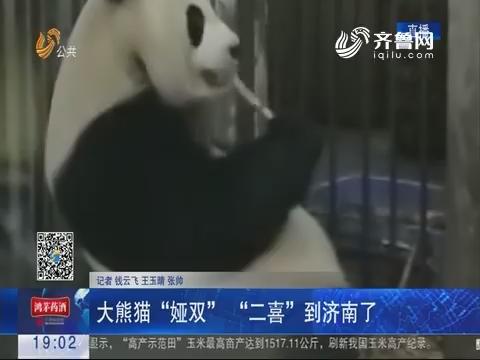 """大熊猫""""娅双"""" """"二喜""""到济南了"""