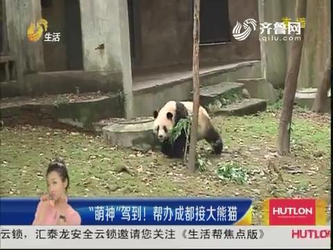 """""""萌神""""驾到!帮办成都接大熊猫"""