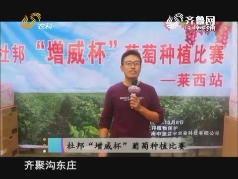 """20171018《当前农事》:杜邦""""增威杯""""葡萄种植比赛"""