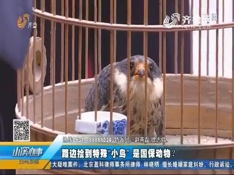 """济南:路边捡到特殊""""小鸟"""" 是国保动物?"""