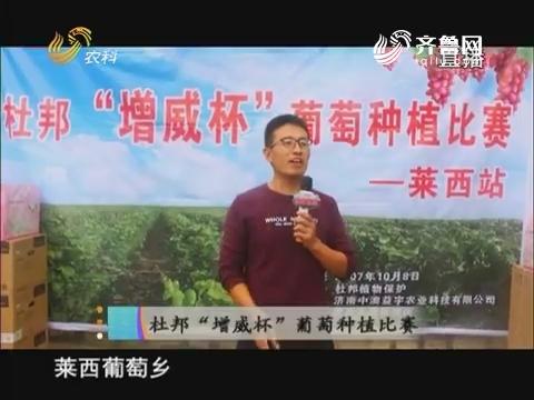 """20171019《当前农事》:杜邦""""增威杯""""葡萄种植比赛"""