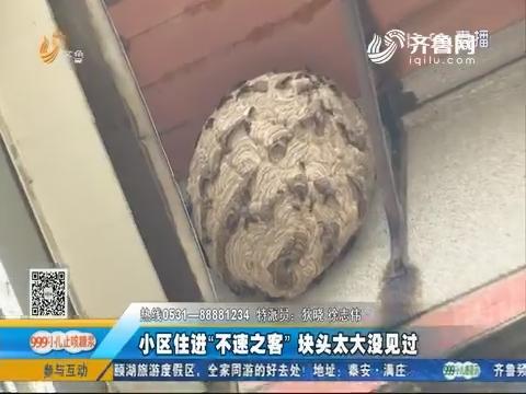 济南:马蜂窝赛铁锅 居民吓得直哆嗦