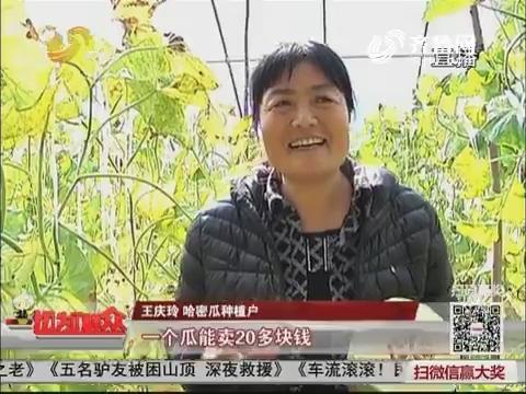【十九大时光】惠民:这个村种的哈密瓜 北京都来收