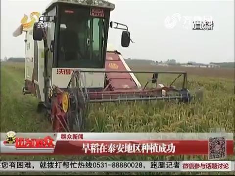 超级稻启动收割 村民笑称:太多了