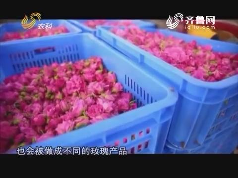 20171019《中国原产递》:鲜花玫瑰膏