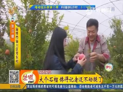 【小家大事】淄博:大个石榴 馋的记者迈不动腿了