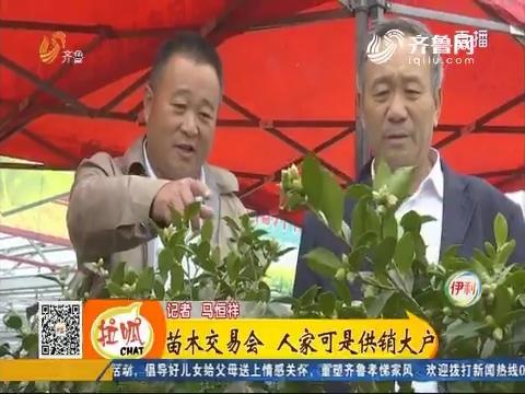 【小家大事】泰安:苗木交易会 人家可是供销大户