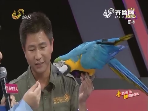 全家总动员:双喜家庭带来美丽鹦鹉 现场讲述动物呆萌之处