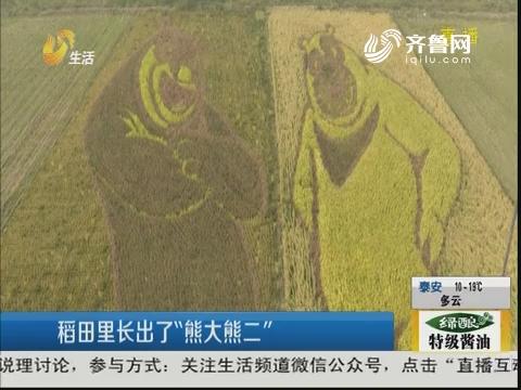 """东营:稻田里长出了""""熊大熊二"""""""