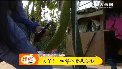 淄博:稀奇!丝瓜长到两米六