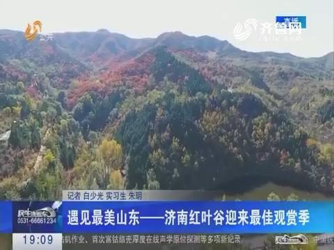 遇见最美山东——济南红叶谷迎来最佳观赏季