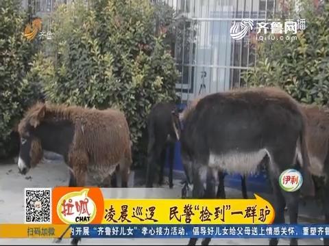 """菏泽:凌晨巡逻 民警""""捡到""""一群驴"""