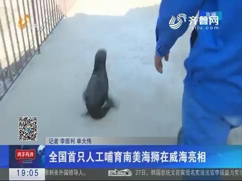 全国首只人工哺育南美海狮在威海亮相