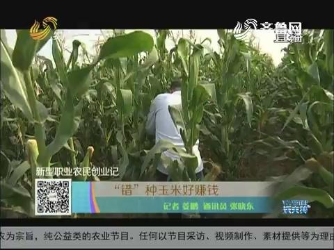 """【新型职业农民创业记】""""错""""种玉米好赚钱"""
