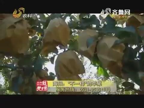 """20171030《品牌农资龙虎榜》:海阳——""""不一样""""的苹果"""