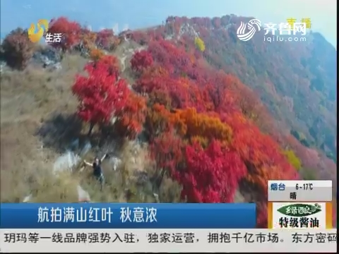 淄博:航拍满山红叶 秋意浓
