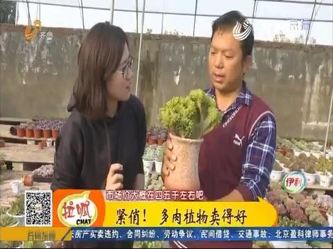 【小家大事】济南:紧俏!多肉植物卖得好