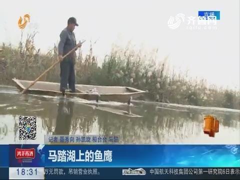 【真相】淄博:马踏湖上的鱼鹰