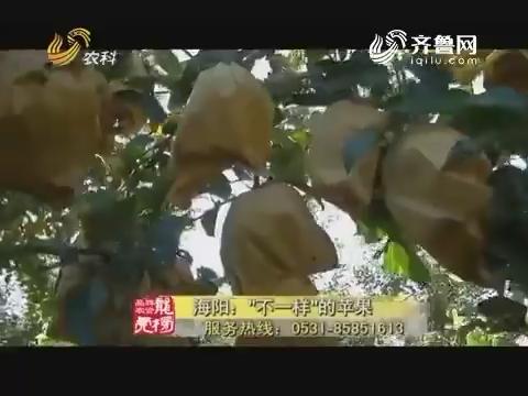 """20171107《品牌农资龙虎榜》:海阳——""""不一样""""的苹果"""
